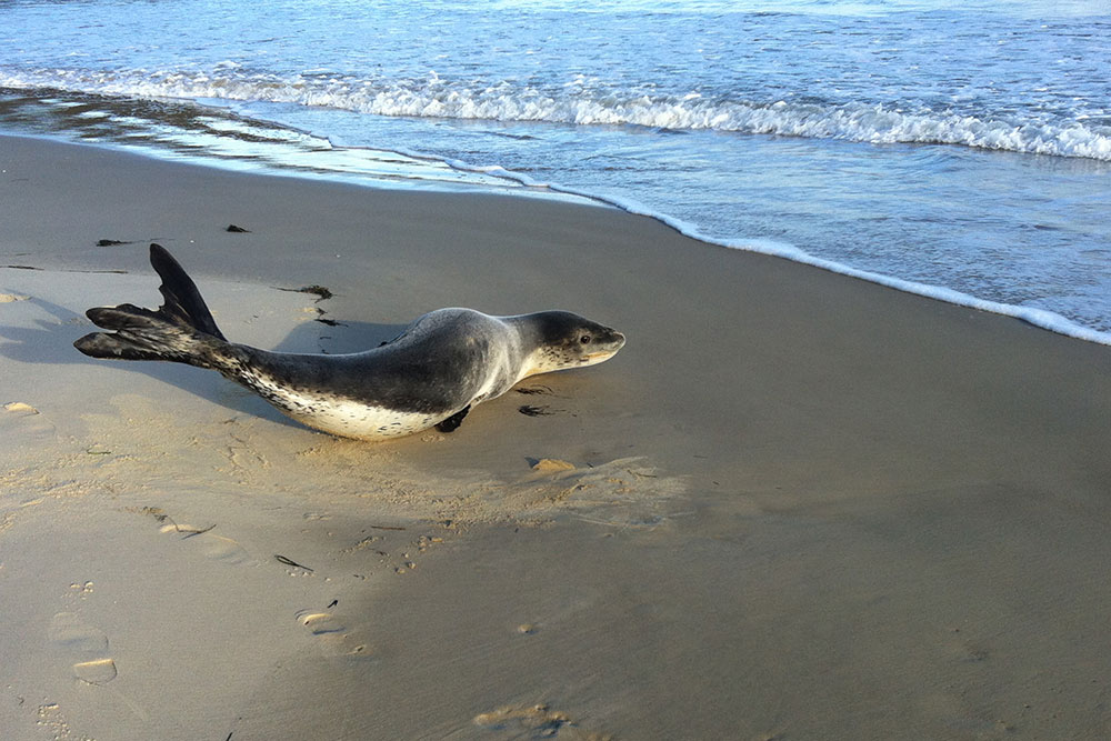 Coles Bay Holiday House - The Freycinet Dream - Leopard Seal